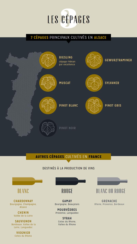 Infographie - Les cépages alsaciens