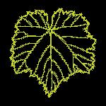 feuille-pinot-noir-Wolfberger