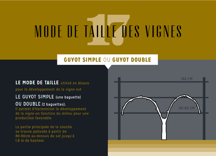 infographie-taille-vigne-wolfberger