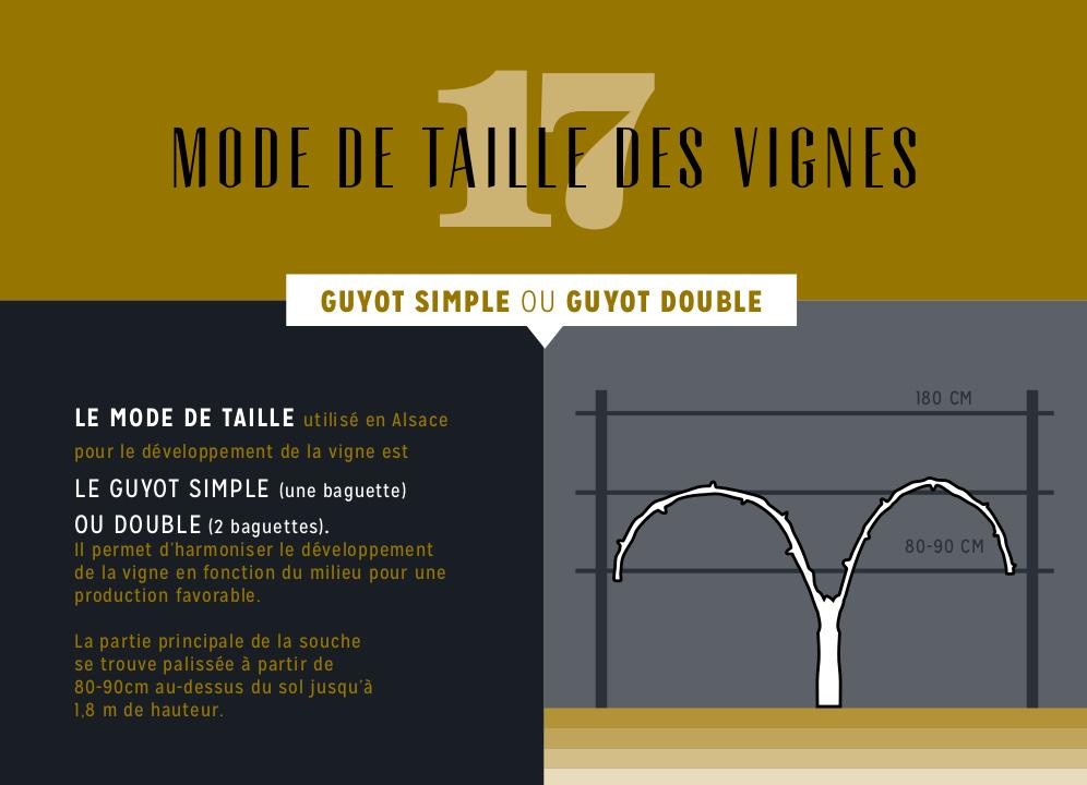 vignoble et vignes d 39 alsace du vigneron wolfberger. Black Bedroom Furniture Sets. Home Design Ideas
